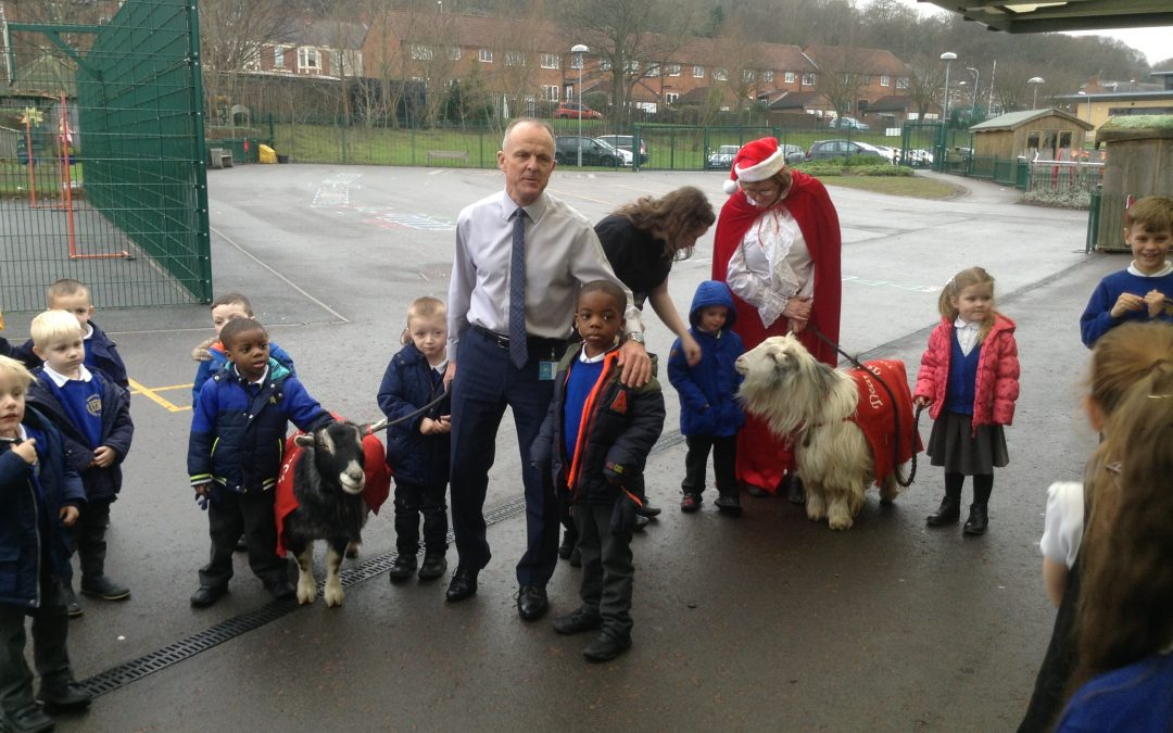 Goats in Festive Coats pay us a visit