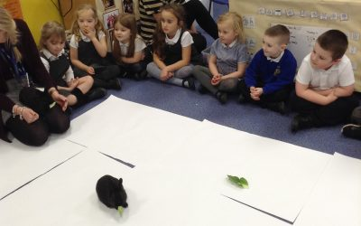 Last week we brought the rabbits into the classroom and let them explore. We sat quietly and after a while the rabbits were more comfortable and came closer to us for us to stroke them. We watched them hop around, clean themselves and eat.