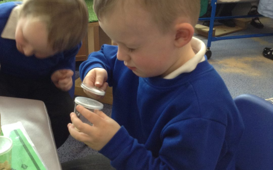 We have loved watching the caterpillars grow and they are now in their cocoons. We can't wait to see what they look like as butterflies!