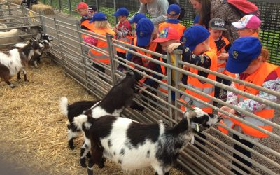 We had a wonderful day at the farm!! We found out lots of facts about the animals, had a tractor ride, fed some lambs and even had a treat in the soft play! It was such a busy day that some of us even had a snooze on the bus on the way home!